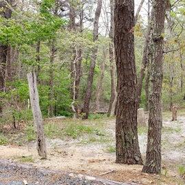 6 Wellfleet Hollow State Park