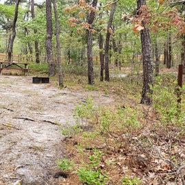 7 Wellfleet Hollow State Park