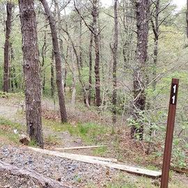 11 Wellfleet Hollow State Park