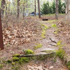 12 Wellfleet Hollow State Park