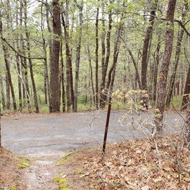 12 Wellfleet Hollow State Park looking back toward road