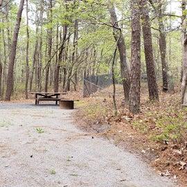 13 Wellfleet Hollow State Park