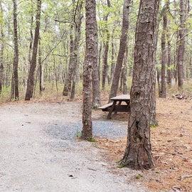 17 Wellfleet Hollow State Park