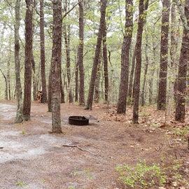 18 Wellfleet Hollow State Park