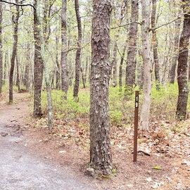 19 Wellfleet Hollow State Park