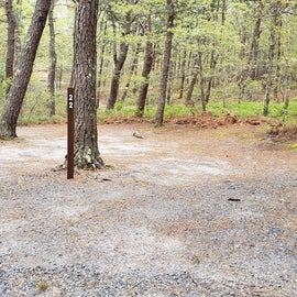 22 Wellfleet Hollow State Park