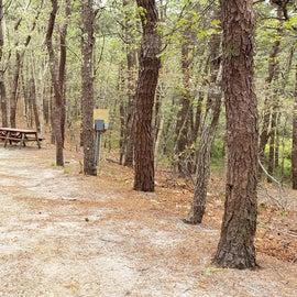 24 Wellfleet Hollow State Park