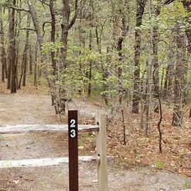 23 Wellfleet Hollow State Park