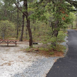 Site 30 Wellfleet Hollow State Campground