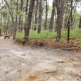 41 Wellfleet Hollow State Park