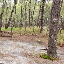 Site 48 Wellfleet Hollow State Campground