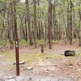 Site 50 Wellfleet Hollow State Campground