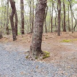 Site 51 Wellfleet Hollow State Campground