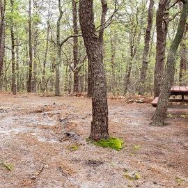 Site 52 Wellfleet Hollow State Campground