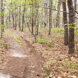 Site 59 trail Wellfleet Hollow State Campground