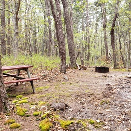 Site 59 Wellfleet Hollow State Campground