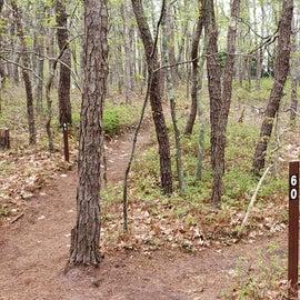 Site 60 Wellfleet Hollow State Campground