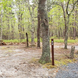 Site 62 Wellfleet Hollow State Campground