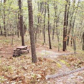 Site 63 Wellfleet Hollow State Campground