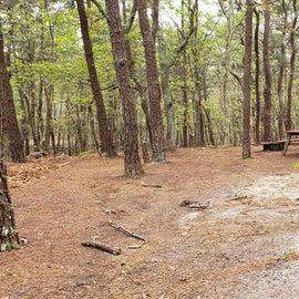 Site 65 Wellfleet Hollow State Campground