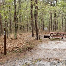 Site 58 Wellfleet Hollow State Campground