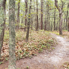 site 54 Wellfleet Hollow State Campground