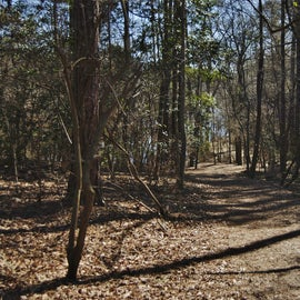 """This is the """"350 yard trail,"""" which leads down to the Neuse River."""
