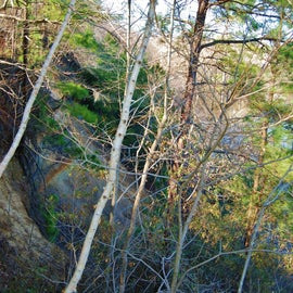These are the cliffs that rise 90 feet above the Neuse River.