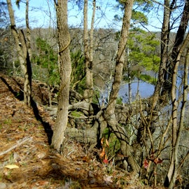 This is one of the views of the Neuse River, which is at the top of the cliffs.