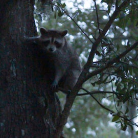 Beware of some little furry friends looking to grab some of your food. Make sure to lock your food up at night.