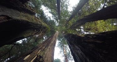 Redwood Bar Dispersed Camping