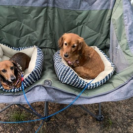 My girls chillin out, maxin, relaxin so cool. (Their first camping trip !)