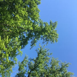 Clear blue sky at Morgan Monroe State Forest