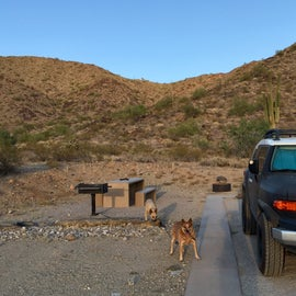 campsite D from the road - nothing fancy, and all the campsites look basically the same with a similar layout