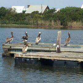 Fishing or crabbing dock on the lagoon