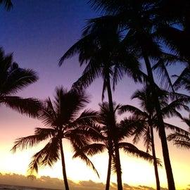 Sunset on the palms
