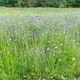 Beautiful wildflowers in June!