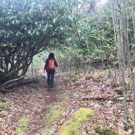 Clear creek trails