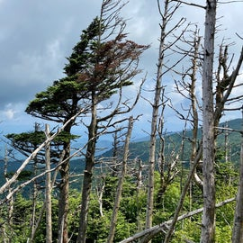 View from the Black Mountain Crest Trail