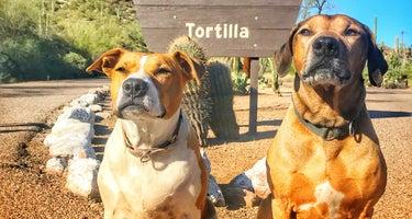 Tonto/Tortilla