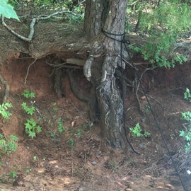 A tree below the ground
