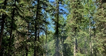 Eagle River Campground - Chugach State Park