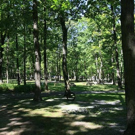 Wooded grassy sites
