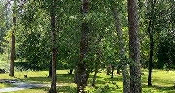 Whitehorse Park