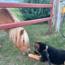 Lil Dwight and our puppy get to know each other.