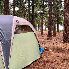 Tent site - fairly open, pine needle floor