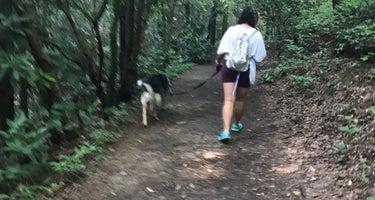 High Shoals Trail