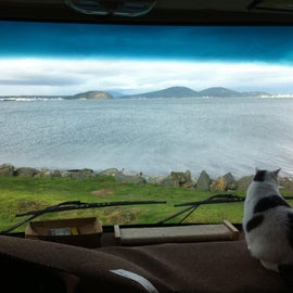 My cat Romeo takes in the view from our dashboard looking directly at Fidalgo Bay.