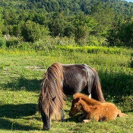 Lots of foals across the mountainscape this June.