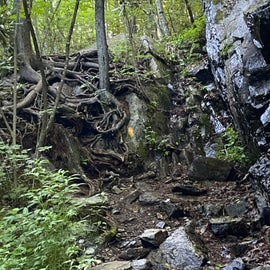 Lots of roots and rocks on Cabin Creek Trail